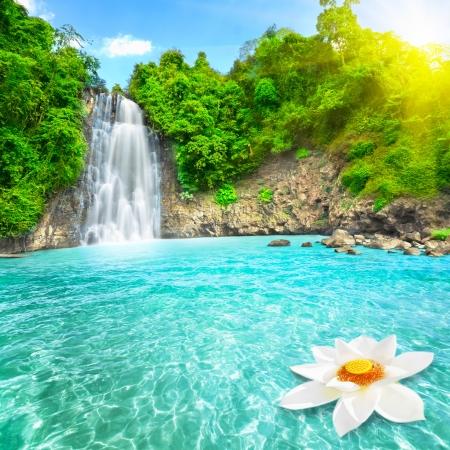Flor de lótus na piscina com cascata Imagens