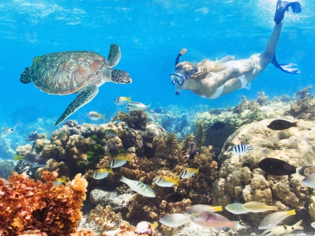 Beautiful woman diver swimming among the coral reef photo