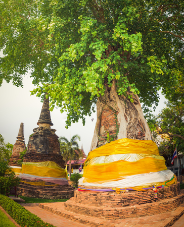 Stupa overgrown by tree in Wat Na Phra Men. Ayutthaya historical park