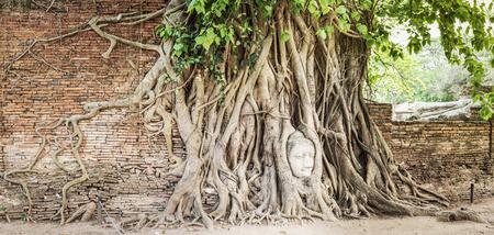 rood: Buddha head overgrown by fig tree in Wat Mahatat. Ayutthaya historical park. Panorama Stock Photo
