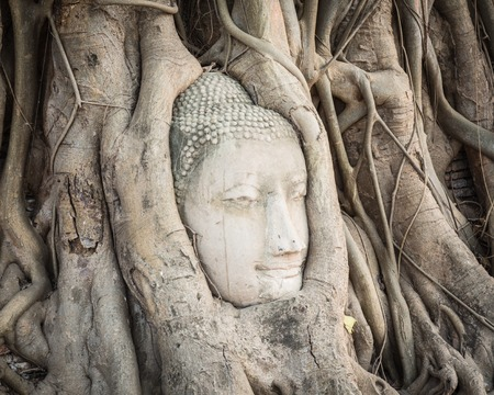 Buddha head overgrown by fig tree in Wat Mahathat. Ayutthaya historical park