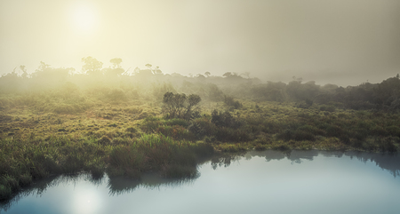 Foggy sunrise at Horton Plains. Panorama