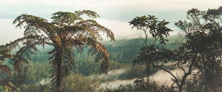 plains: Foggy morning at Horton Plains. Fern on the foreground. Panorama
