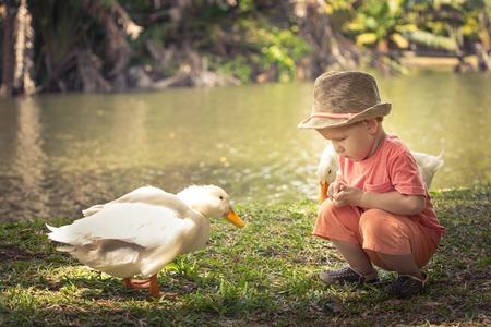 cognicion: El muchacho y gansos cerca del lago. Mauricio