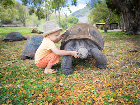 Child touching Aldabra giant tortoise. Mauritius