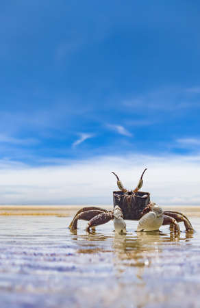 Crab on the empty tropical beach