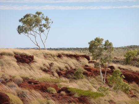 windswept: Windswept outback landscape in the East Kimberley area, Western Australia