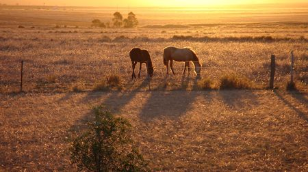 Rural scene with horses at sunset photo