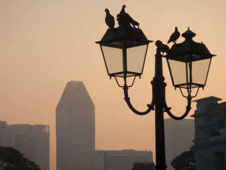 PIgeons on street lamps, Singapore River. photo
