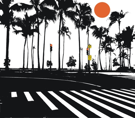 Vector illustration of palm trees in black and white Vector
