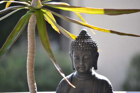Asian statue and leafy plant close up photo