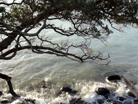 breaking: Close up of tree branches with waves breaking on rocks
