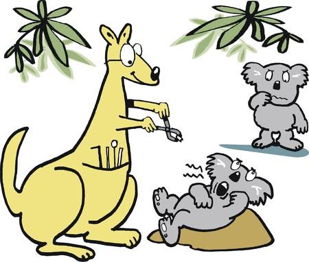 extracting: Vector cartoon of kangaroo dentist extracting tooth from koala