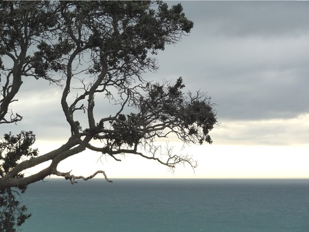 Silhouette of coastal tree with sea and sky background Stock Photo