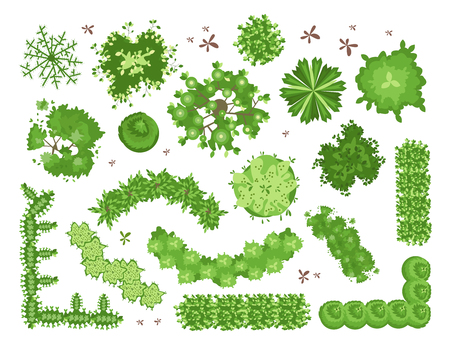 Set of different green trees, shrubs, hedges. Top view for landscape design projects. Vector illustration, isolated on white background.