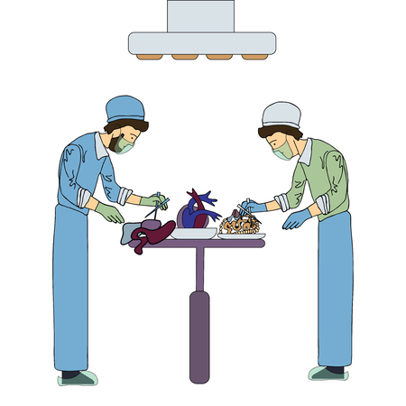 human liver: Two transplant surgeons work with organs for transplantation. Medical vector illustration, isolated on white background.