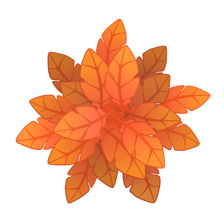 Orange plant or tree, top view. Vector illustration, isolated on white background. Illustration