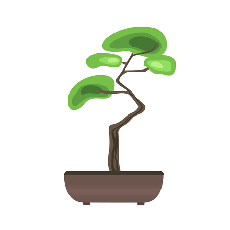 Bonsai tree in a pot. Japanese art of growing miniature trees. Vector illustration, isolated on white background.
