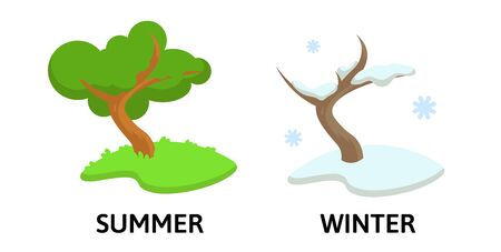Words winter and summer opposites flashcard with cartoon tree in two seasons. Opposite nouns explanation card. Flat vector illustration, isolated on white background.