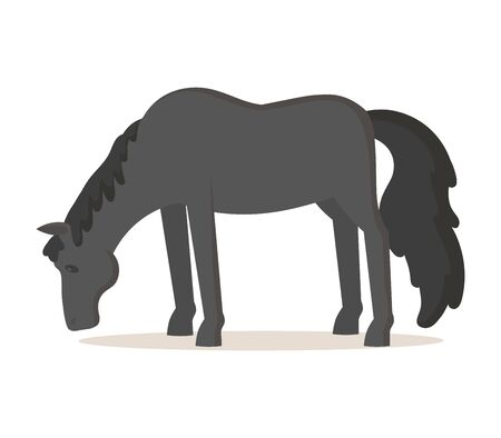 Black horse standing isolated on white Illustration