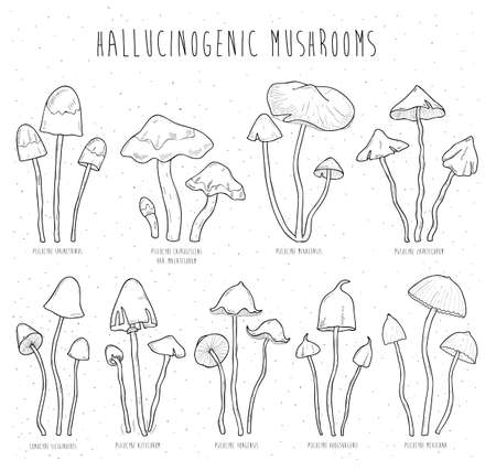hallucinogenic: Set hallucinogenic mushrooms. Illustration