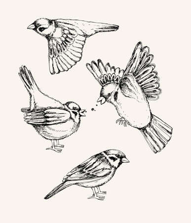 Set with different flying and sitting sparrow.