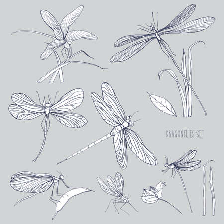 adder: Set of various dragonflies in different poses. Monochrome hand drawn collection flying adder. Vector illustration.