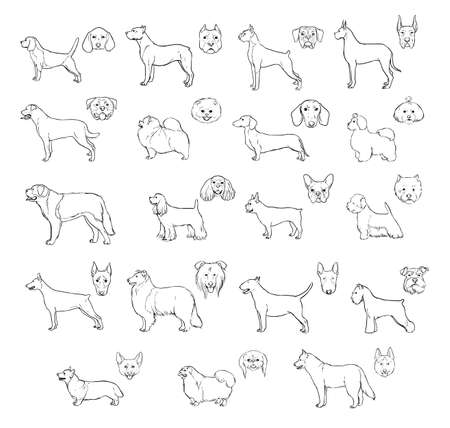 borzoi: Dog breeds, side view and muzzle set. Collection with hand drawn contour realistic illustration. Illustration