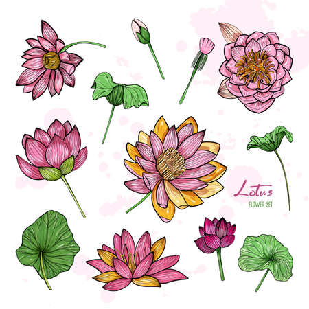 Set of lotus flower in different views. Bloomed, buds and leaves. Hand drawn colorful illustrations collection.