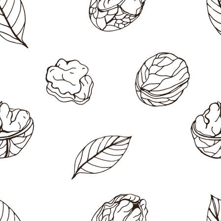 Nut seamless on white background. Hand drawn contour pattern with walnut. Ilustração