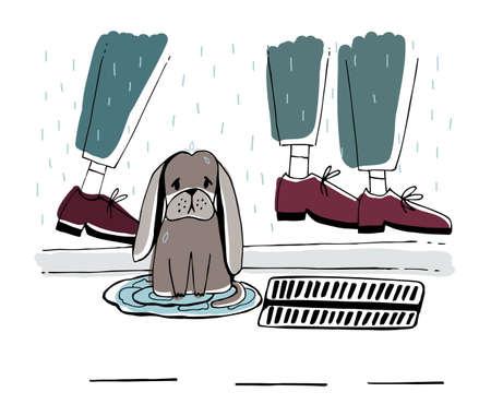The stray dog at street, Homeless puppy with sad look under rain.