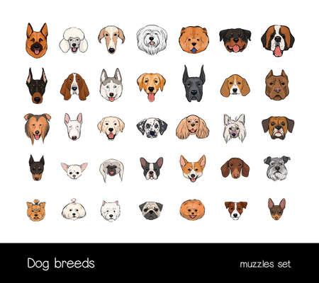 Dog breeds, muzzle set. Collection with hand drawn colorful realistic illustration. Illustration