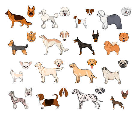 borzoi: Dog breeds, side view and muzzle set. Collection with hand drawn colorful realistic illustration. Illustration