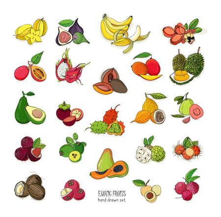 Exotische tropische Früchte Hand gezeichneten Satz. Sammlung von ganzen Früchten und Cutaway. Avocado, Ackee, Banane, Guave, Hartriegel, Durian, Feigen, Karambolen, Kiwano, Kokosnuss, Litschi, Longan, Mango, Mangostan. Standard-Bild - 77006043