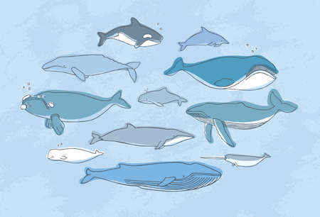 gray whale: Different whale set. Hand drawn doodle illustration collection. Illustration