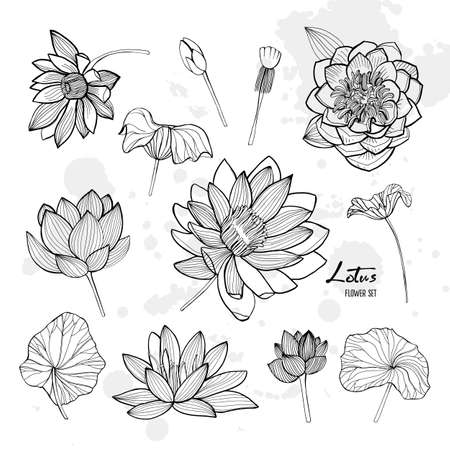 Set of lotus flower in different views. Bloomed, buds and leaves. Hand drawn contour illustrations collection Illustration
