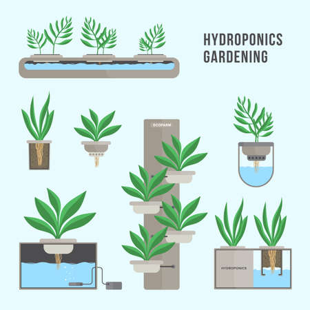 Hydroponic system, gardening technology. Collection of different plants in flat style. Stock Illustratie