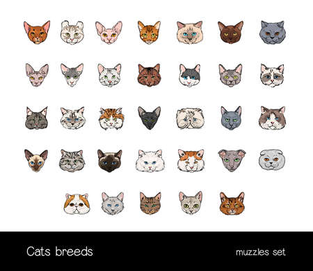 ollection: Set of muzzles different cats breeds. Big ollection of hand drawn colorful illustrations. Illustration