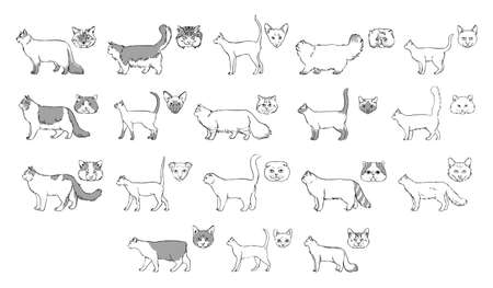 longhaired: Set of cats breeds, side view, muzzle. Collection with hand drawn monochrome realistic illustration. part 2