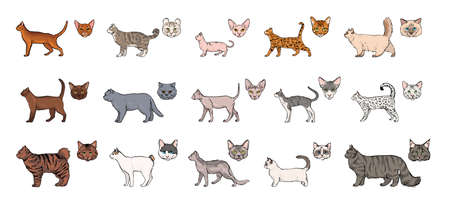 cats breeds, side view and muzzle set. Collection with hand drawn colorful realistic illustration. part 1. Illustration