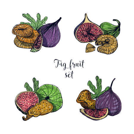 Set of different fig fruit. Fresh and dried fruits, leaf, slices. Colorful vector hand drawn illustration.