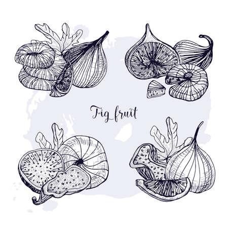 다른 무화과 열매의 집합입니다. 신선하고 말린 과일, 잎, 조각. 흑백 컨투어 벡터 손으로 그려진 된 그림입니다. 일러스트