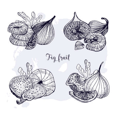 Set of different fig fruit. Fresh and dried fruits, leaf, slices. Black and white contour vector hand drawn illustration.
