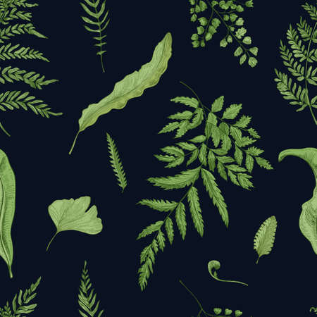 twigs: Fern green leaves on black background. Hand drawn seamless pattern with realistic plants. Colorful vector illustration