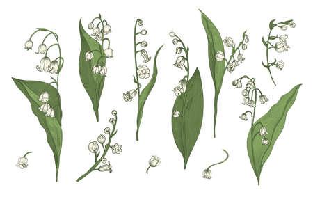 Lily of the valley realistic collection. Hand drawn buds, leaves and stems set. Colorful vector illustration Ilustracja