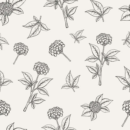 Lovely botanical seamless pattern with ginseng berries growing on stem with leaves on white . Exotic plants with ripened fruits. Monochrome illustration for fabric print, wallpaper.