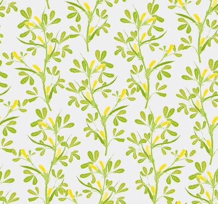 Floral seamless pattern with flowering fenugreek plants on white background. Pretty yellow flowers growing on green stems with leaves hand drawn in vintage style. Vector illustration for wallpaper. Ilustracja