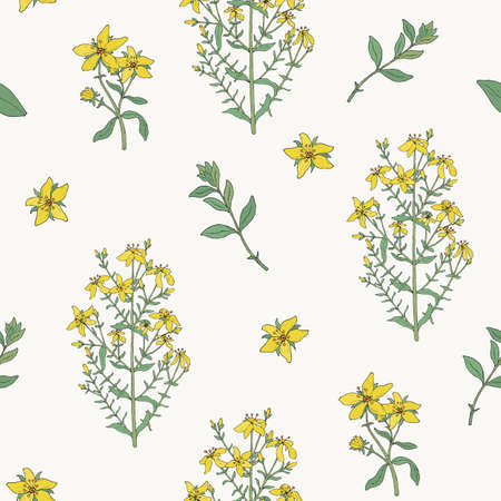 A Seamless pattern with St. John s wort medical botanical blossom plant. hand drawn vector colorful texture. Illustration