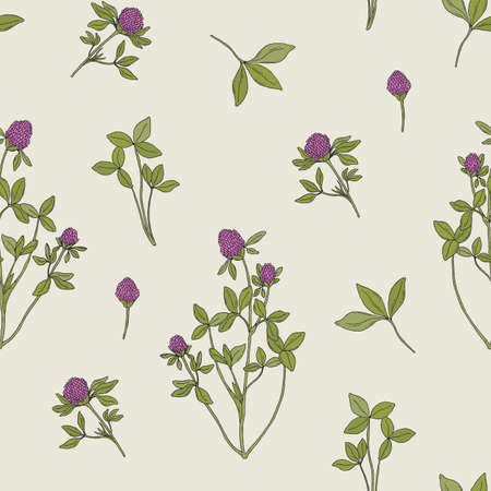 red clover: Beautiful floral seamless pattern with red clover on light background. Meadow plant with pink blooming flowers and green trifoliate leaves hand drawn in retro style. Vector illustration for wallpaper. Illustration