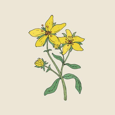 Elegantes Zeichnen Des Rotklees Mit Rosa Blühenden Blumen Und Grünen ...